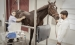 dubai-equine-hospital-29-of-71_resize