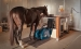 dubai-equine-hospital-40-of-71_resize